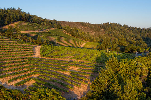 Armstrong Vineyard