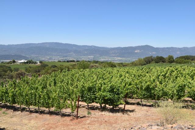 Houyi Vineyard