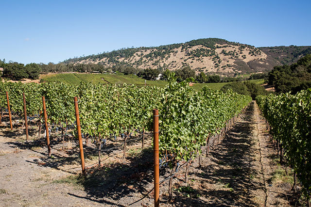 Tench Vineyard